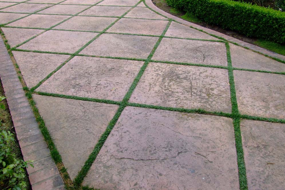 Groundcover Forms Geometric Patterns